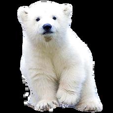 Solar Bear - Project Solar Bear